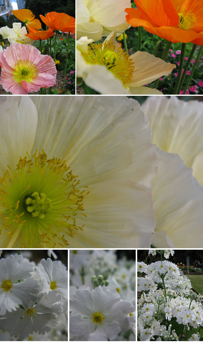 Botanics-1