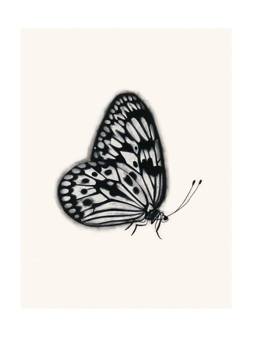 Matou_en_Peluche_Butterfly