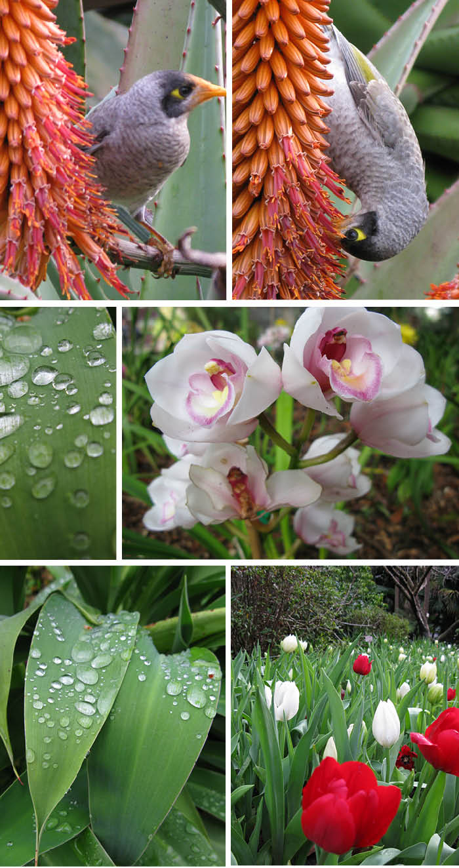 The_Royal_Botanics_Matou_en_Peluche
