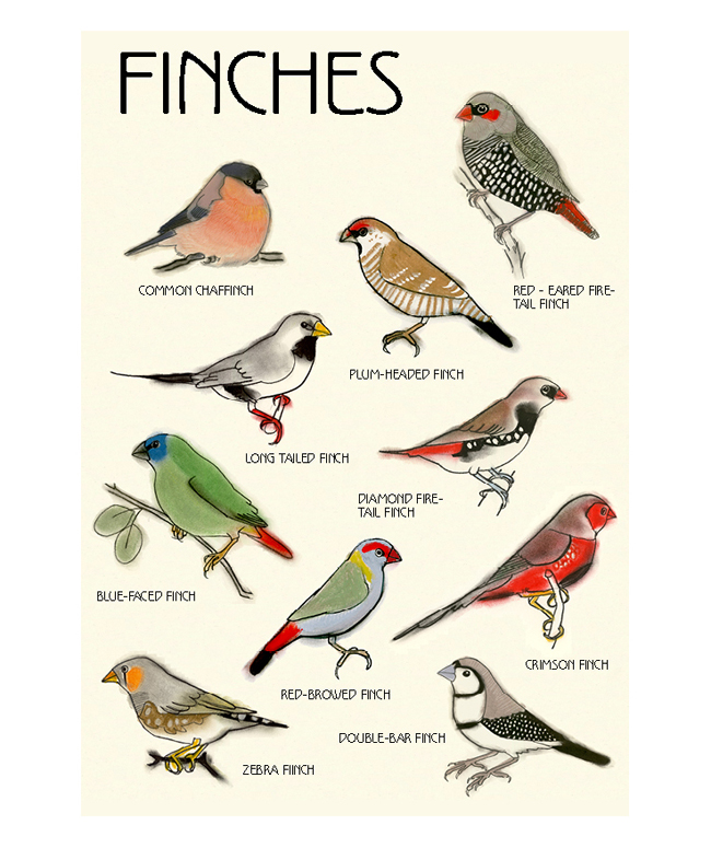 Finches poster finished-2