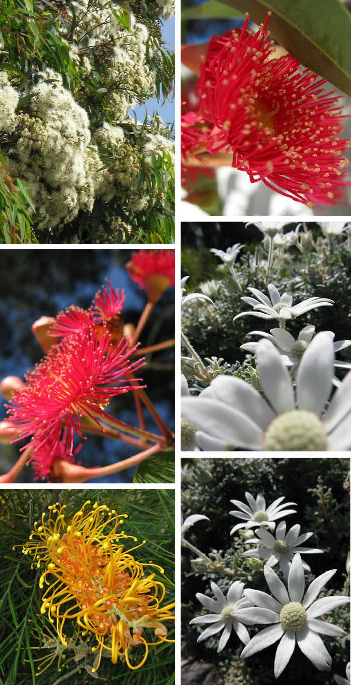 January Flowers