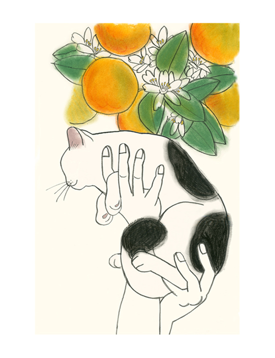 Matou_en_Peluche_Aloft_Oranges-crop