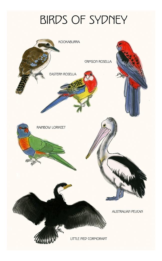 Matou_en_Peluche_Sydney_birds_II