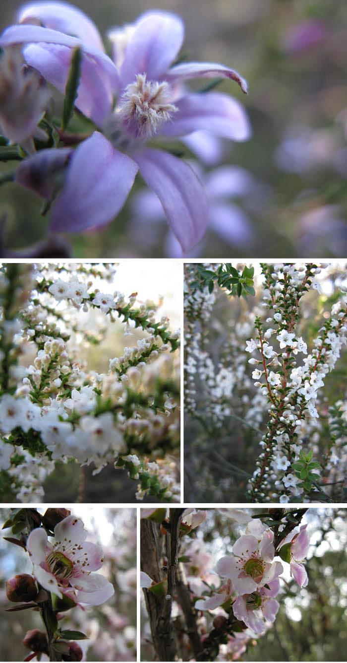 Matou en Peluche Sydney Bush Fleurs