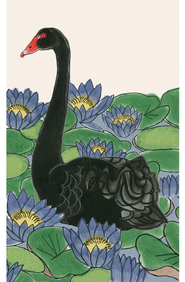 Matou_en_Peluche_Swan Pond