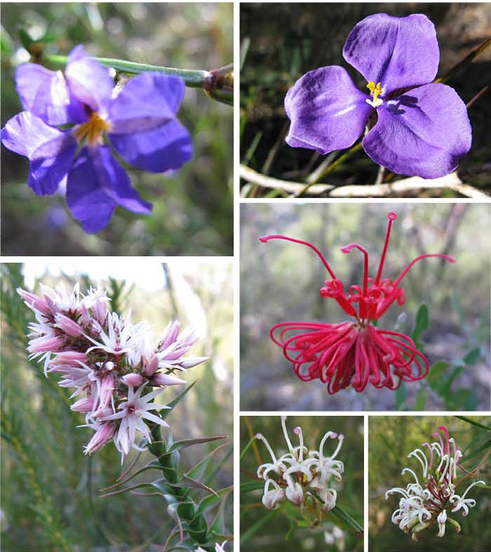 Sept_Bush Flowers 3