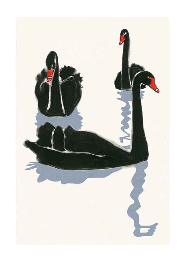 Matou_en_Pelucche_Swans