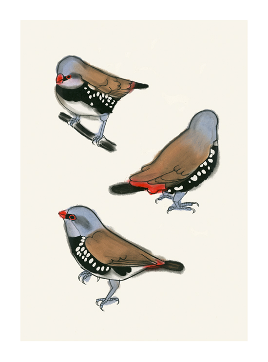 Matou_en_Peluche_Diamond_Firetail_Finches