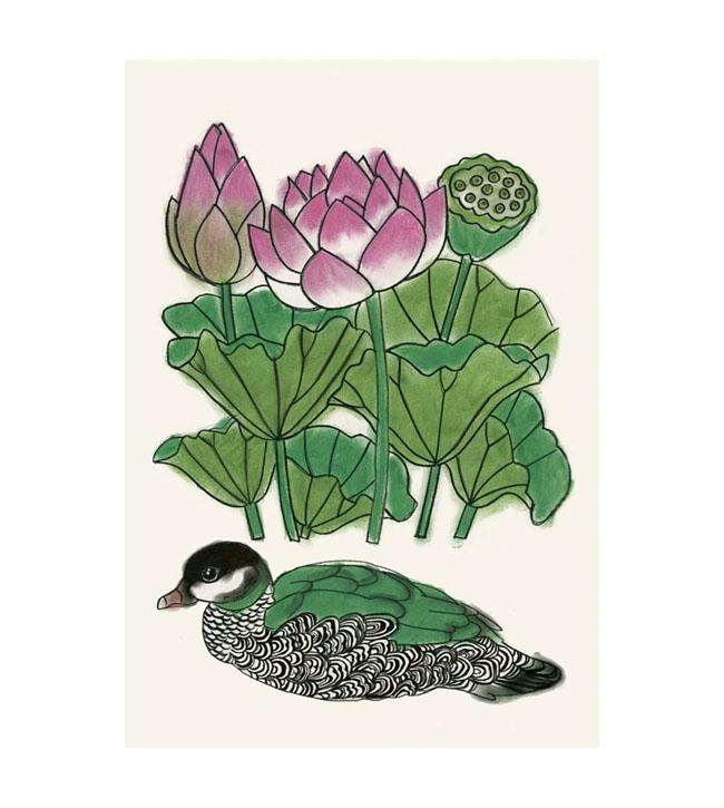 Matou_en_Peluche_Pygmy duck lotus_cropped