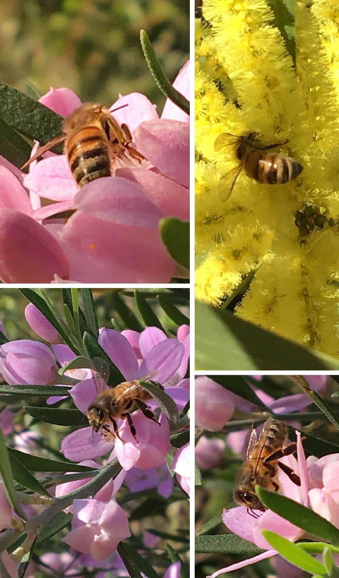 Matou_en_Peluche_Spring_bees
