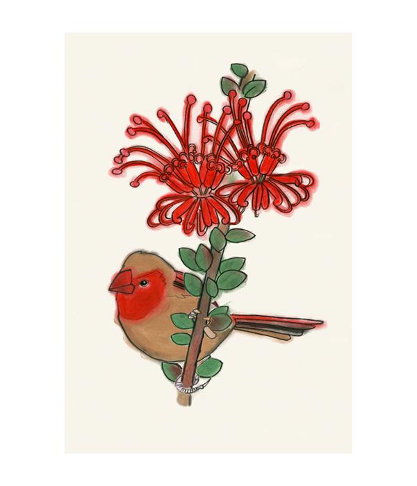 Matou_en_Peluche_Finch_Spider_flower