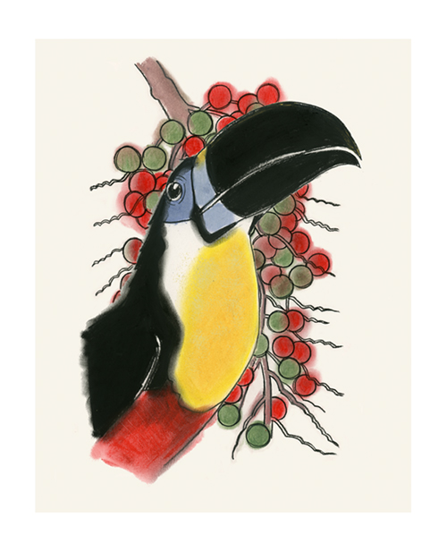 Matou_en_Peluche_Palm fruit_Toucan