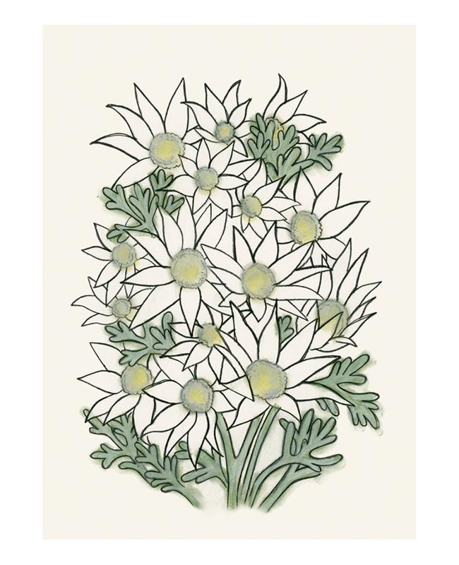Matou_en_Peluche_Flannel_Flowers